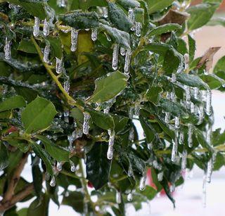 Ice Storm 1-10-11-4