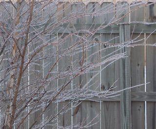 Ice Storm 1-10-11-3
