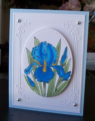HC Release Iris-blue